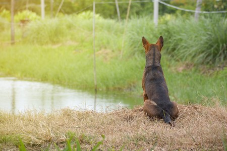 sitting on the ground: dog sitting on the ground in country Thailand Stock Photo