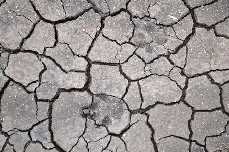crack: dog footprint on the ground
