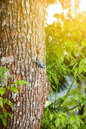 chameleon on bark treee