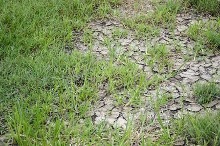crack: fresh green grass on dry soil in nature garden