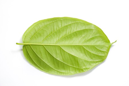 Combretum indicum leaves on white background Reklamní fotografie