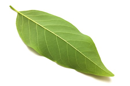 verse groene Annona-squamosabladeren op witte achtergrond