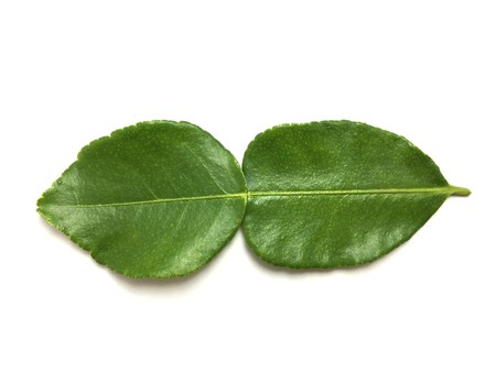 fresh green Kaffir lime leaves on white background