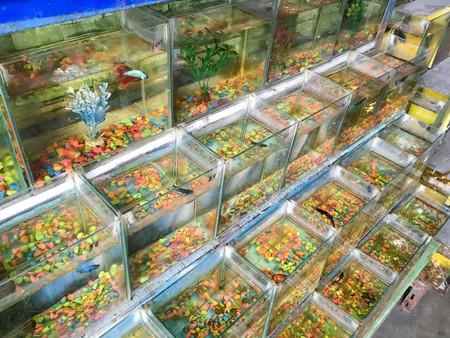 Small fish tank in market Stock Photo