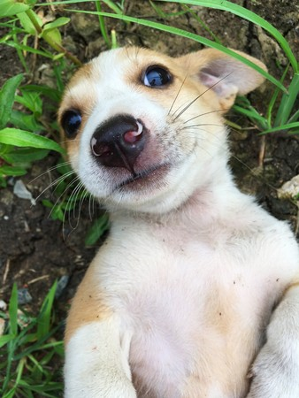 cute baby dog on the ground