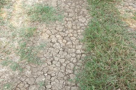 fresh green grass on dry soil in nature garden