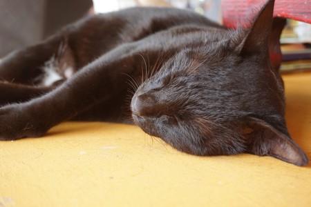 cute black cat sleep on wooden table