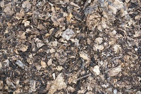 dry leaf on the ground Stok Fotoğraf