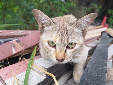 cute cat on wood floor