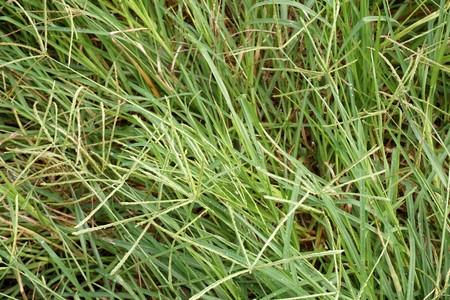 Fresh green grass in nature garden Stock Photo