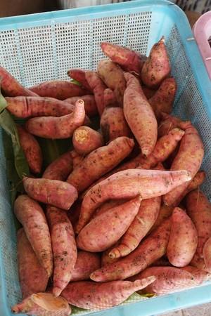 Manihot esculenta root in fruit shop Stock Photo