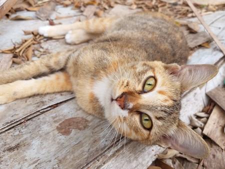 cute cat on wood floor