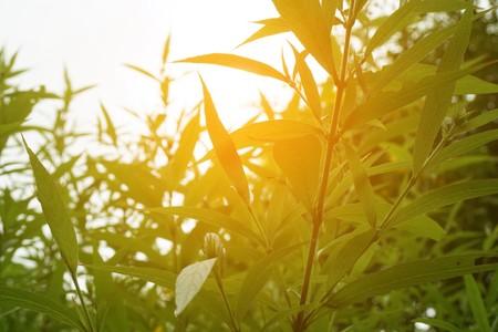 fresh green plant in nature garden