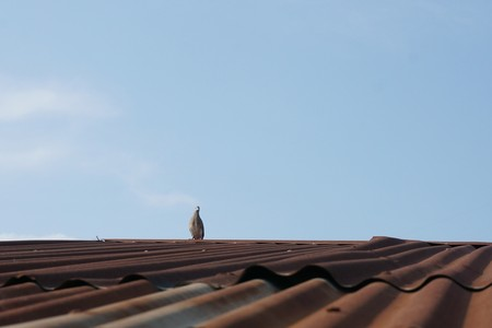 small bird on old roof