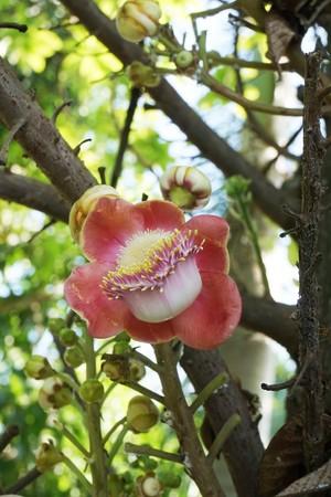 sal flower in nature garden