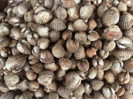 close up fresh anadara granosa in raw market Stock Photo