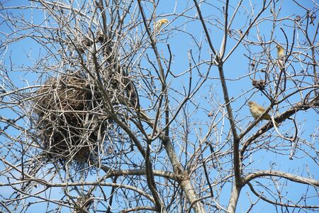 bird nest on dry branch tree Stock fotó