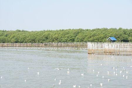 seagull flying at Bang Pu sea, Thailand Banco de Imagens