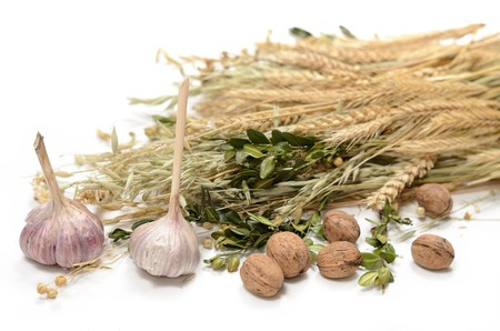 Stems of wheet, rye, flax, oat and periwinkle on white background. Concept symbol of welfare and wealth. Harvest. Ukrainian and slavic national food as basis of bread. Garlic and walnuts