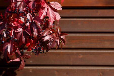 Natural background - autumn red leaves and blue berries on a wooden background Stockfoto - 133475738