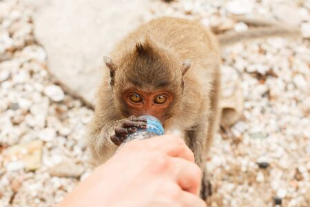 Animals and wildlife. Little monkey drinks from a plastic bottle, close-up