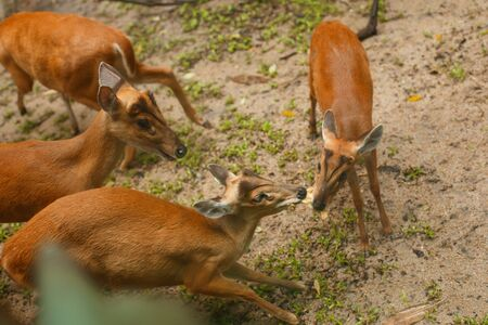 Wildlife animal. Deers fight and take food from each other Banco de Imagens