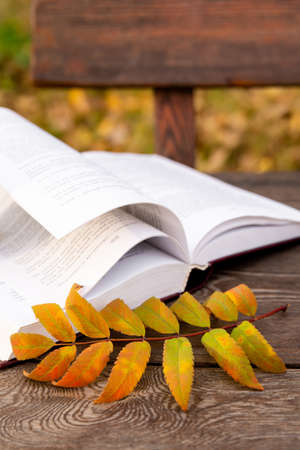 an autumn yellow leaf lies on pages of an open book, on wooden bench. Imagens