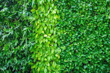 many kinds of plant on wall as background