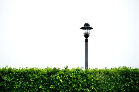 garden lamp: Isolated garden lamp and plant bush