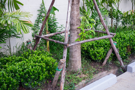 replant: montante di sostegno in legno per l'albero di ripiantare dopo lo spostamento Archivio Fotografico