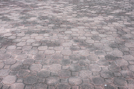 octagon: Squar and octagon brick floor as pathway