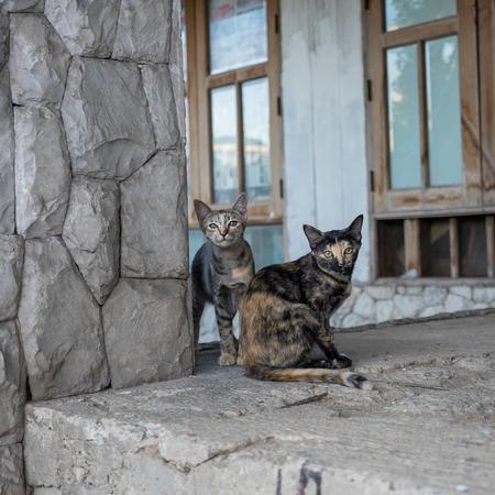 abandon: stray cats living in abandon house