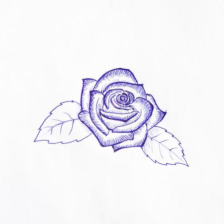 ballpoint: Ballpoint pen sketch of rose
