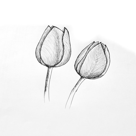 free hand: Ballpoint pen sketch of tulip Stock Photo