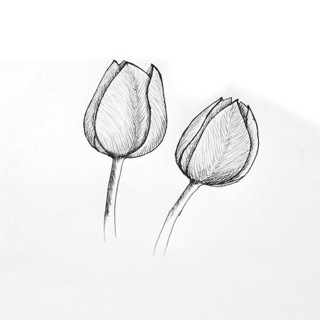 ballpoint: Ballpoint pen sketch of tulip Stock Photo