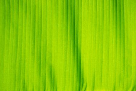Mooie en kleurrijke bananenbladeren als achtergrond