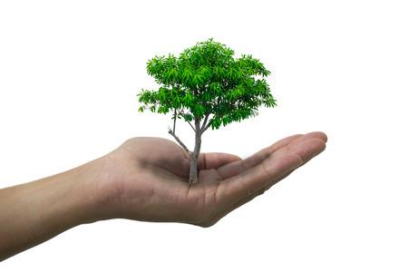 Mano isolata aperta e albero sul palmo