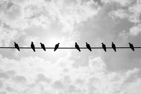 Silhouette nine pigeons are resting on electric wire and shiny cloudy summer sky in the background. Eight pigeons looking to the left but only on pigeon think different and looking to the right
