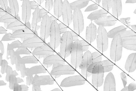 monotone: Monotone soft focus closed up black and white leaves for background. Nature background. Stock Photo