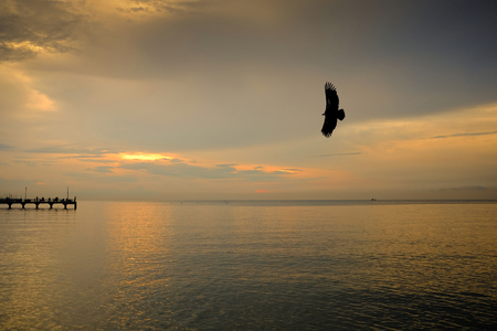Silhouette eagle flying with freedom and pride over the calm sea when sunset and people fishing on the dock.