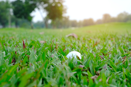 Golf ball is half buried in the long green grass. In the rough.