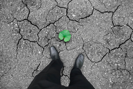 Businessman in black shoes standing on dry cracked land with green leaf of hope. Business concept of opportunity, hope, success.