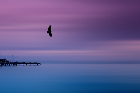 Silhouette eagle flying over the fishing dock in the calm sea in the evening with beautiful smooth purple sky and blue sea.