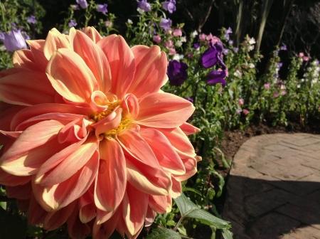 doi: Pretty flower Doi Tung Stock Photo