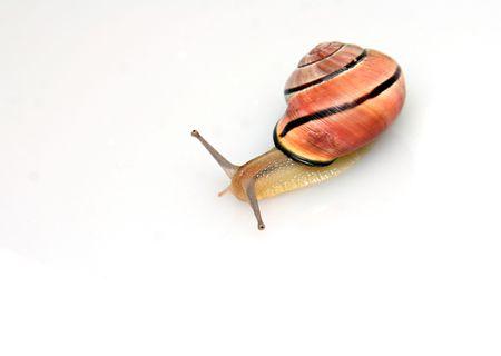 걷는 달팽이