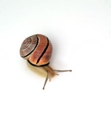 snail isolated on white background 스톡 콘텐츠