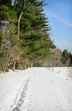 snowy forest trail Фото со стока