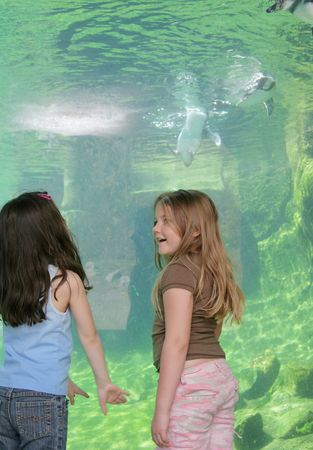 swimming bird: small female children talking near the aquarium