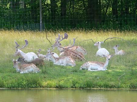 muchos jóvenes ciervos machos y hembras en un campo fuera del sol cerca del agua Foto de archivo - 3959345