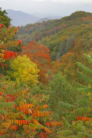 colorful foliage in the Smoky Mountains National Park during autumn landscape over mountains